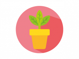 Health and Wellbeing Strand - Growing plant